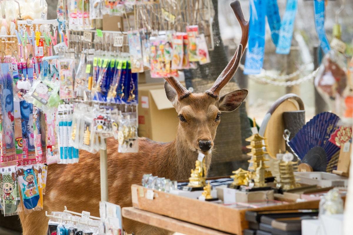 Sika Deer Nara Japan Beyond the Border by Yoko Ishi