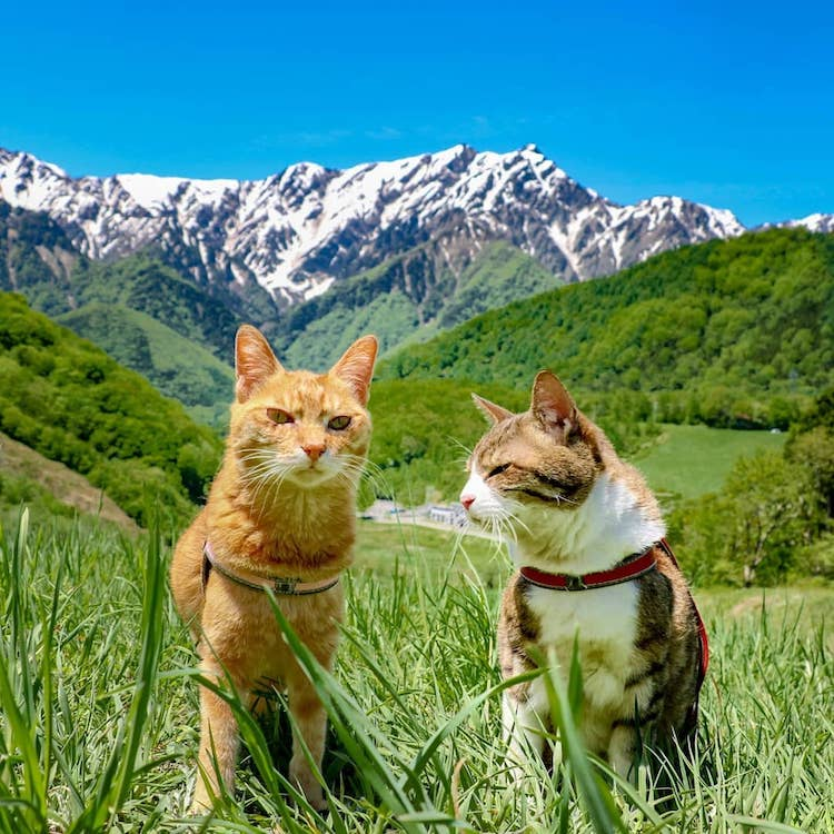 Los gatos viajeros de Japón