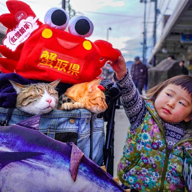 Gatos de viaje por Japón