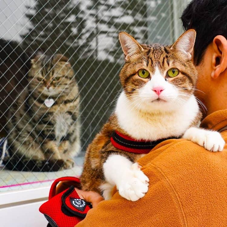 Gatos viajando por Japón