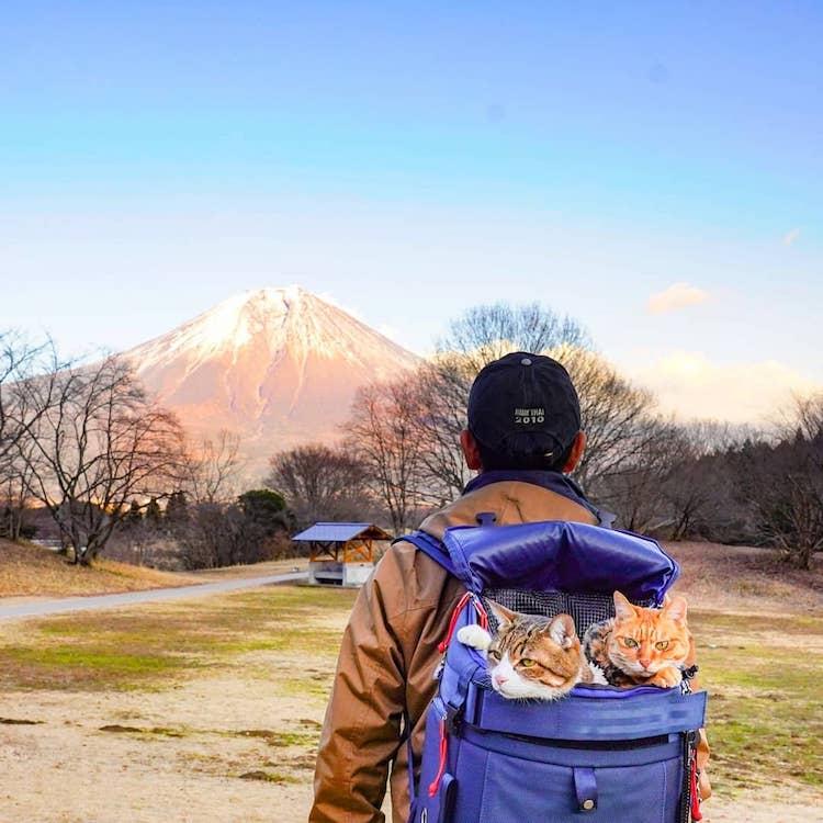Gatos viajeros por Japón