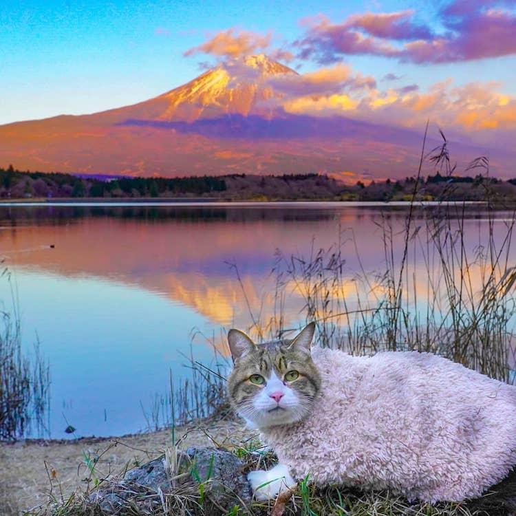 Gatos viajan por Japón
