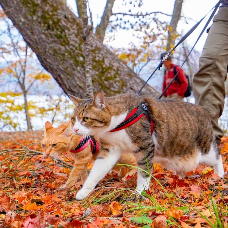 The Traveling Cats in Japan
