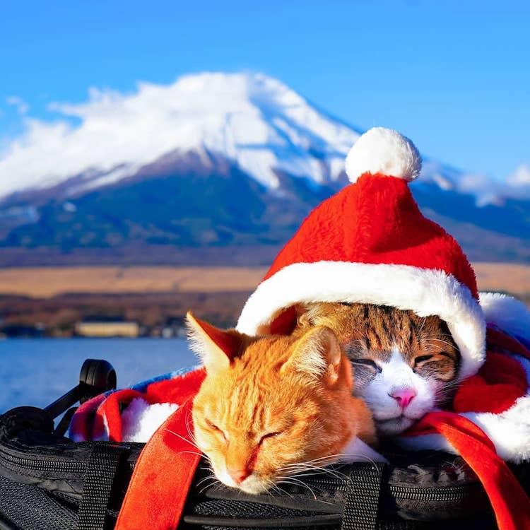 Gatos que viajan por Japón