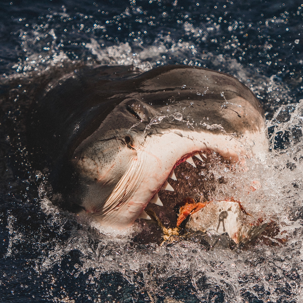 Shark Photography by Euan Rannachan