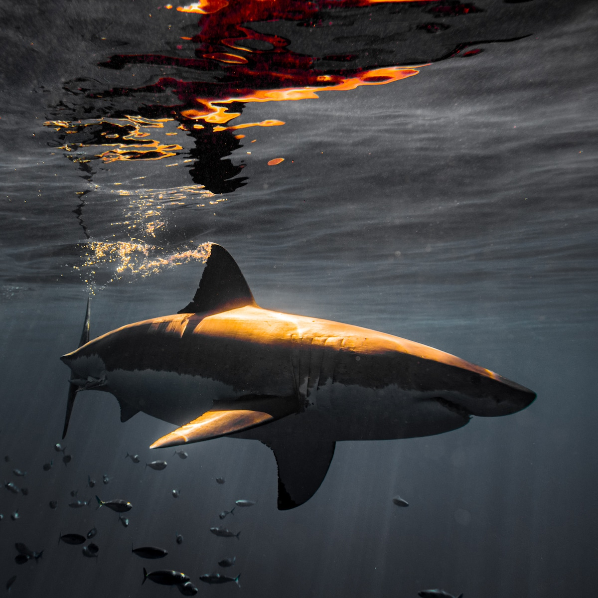 Photo of a Shark by Euan Rannachan