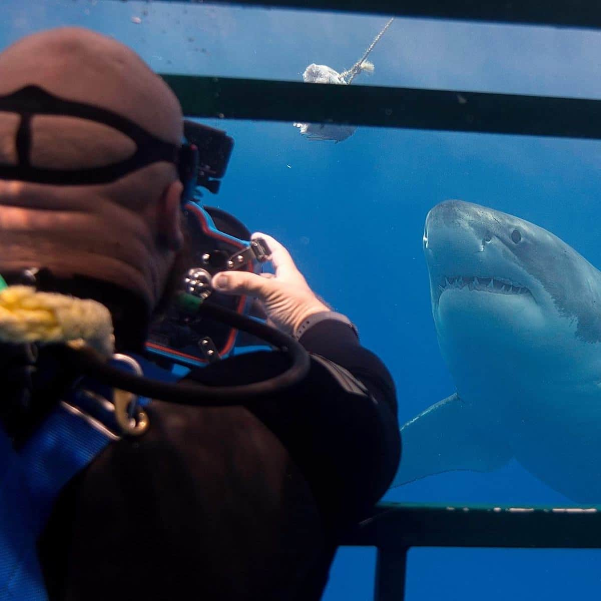 Shark Cage Photography by Euan Rannachan