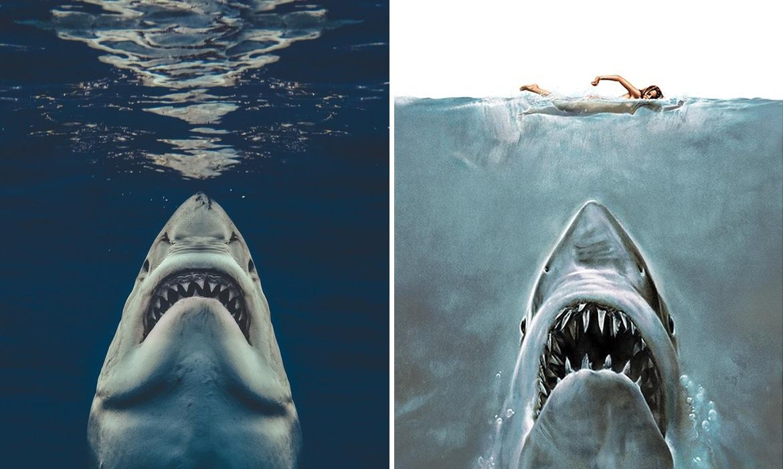 Image result for shark