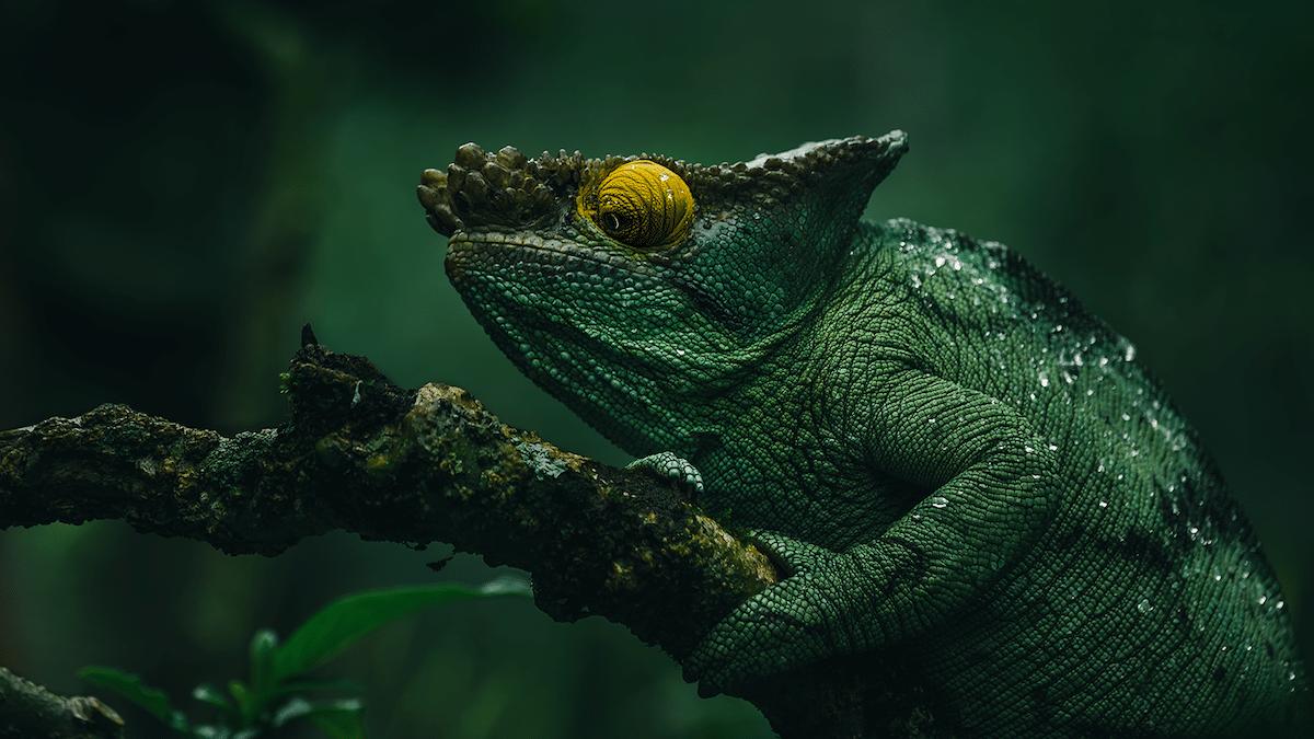 Reptile in Madagascar
