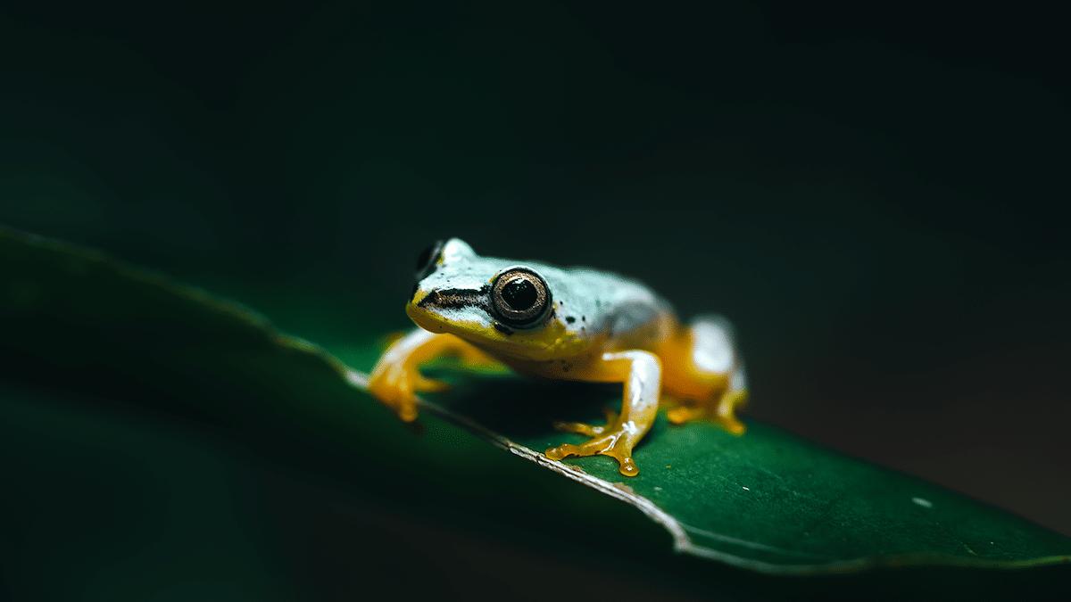 Amphibian in Madagascar
