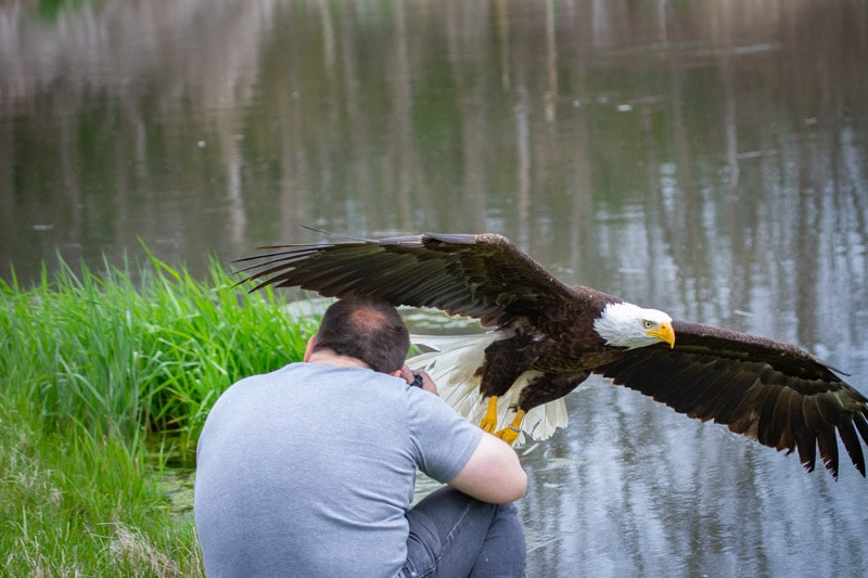 Photographing a Bald Eagle