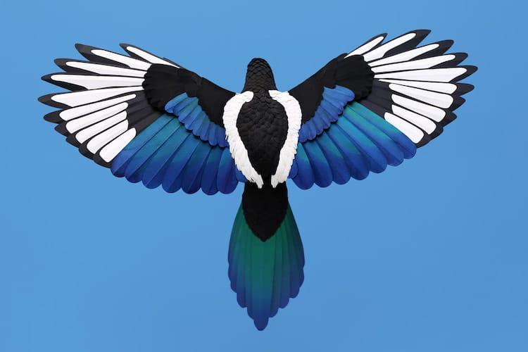 Pájaros de papel por Diana Beltran Herrera