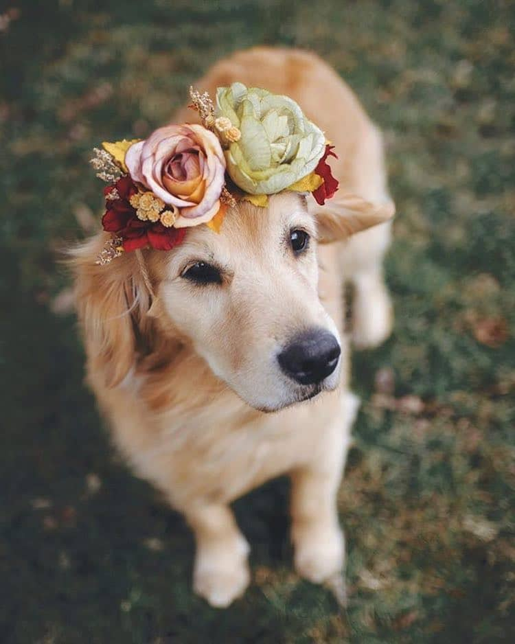 Flower Crown Pet Accessories by Freya's Floral Company