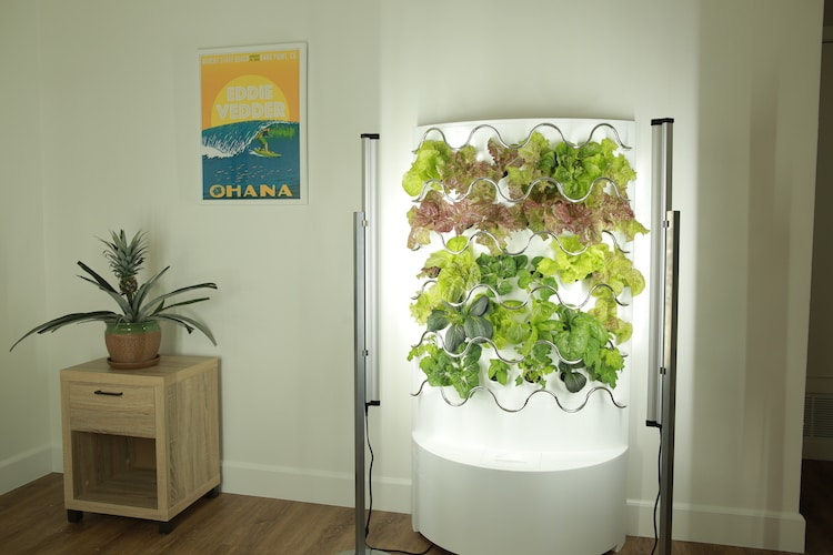 Self-Watering Indoor Garden
