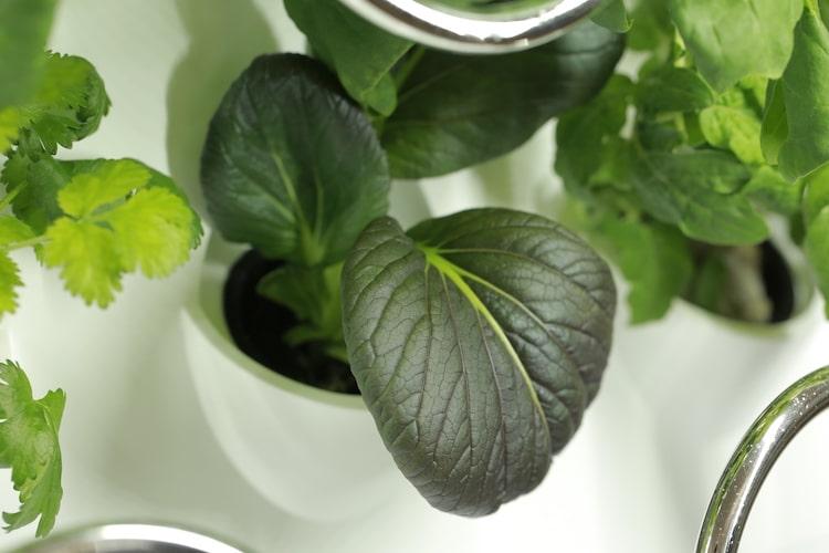 iHarvest - Indoor Hydroponic Garden