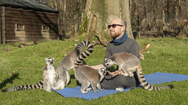 Yoga junto a lémures en Armathwaite Hall