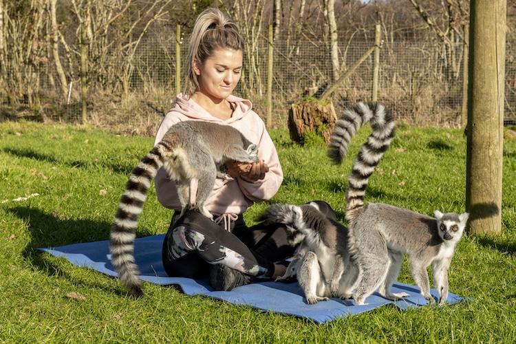 Hacer yoga junto a lémures en Armathwaite Hall