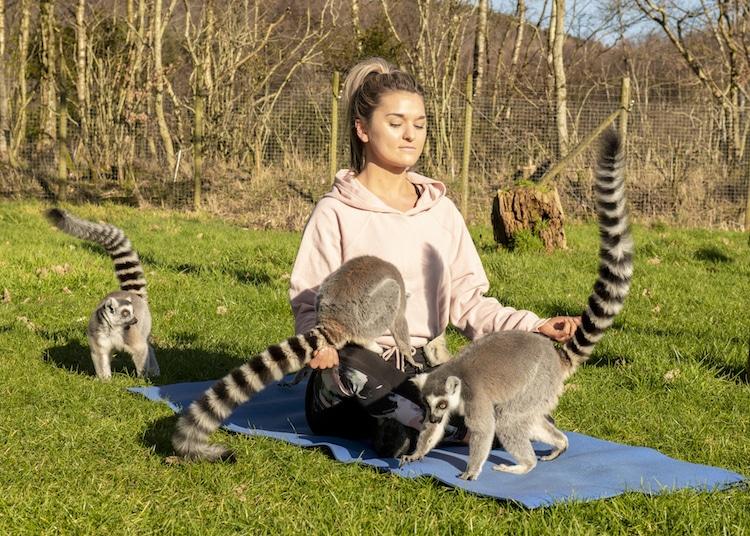 Lemur Yoga at Armathwaite Hall