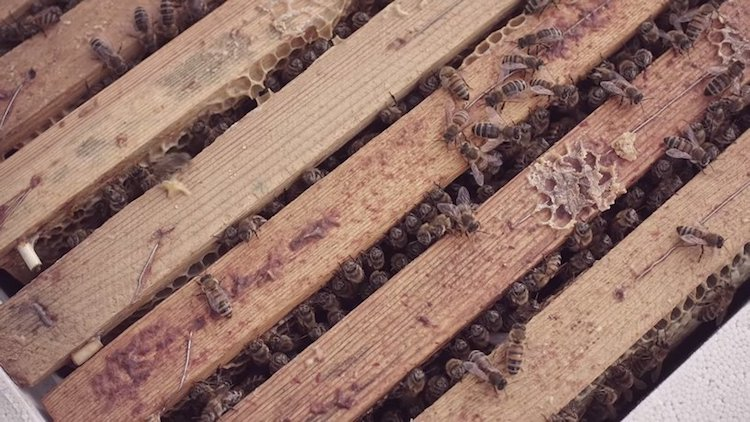 McDonald's for Bees McHive by NORDDDB