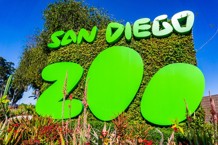 Adult Roar And Snore San Diego Zoo Is A Grown Up Twist On A Sleepover