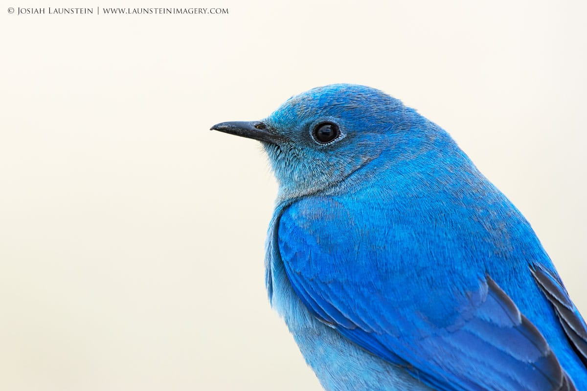 Bird Photography by Josiah Launstein