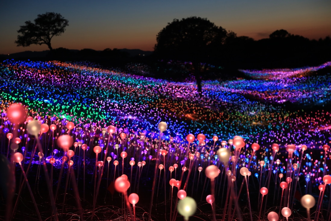 Field of Llight at Sensorio by Bruce Munro