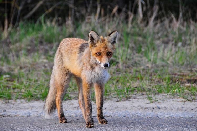 Wildlife Tours in Chernobyl