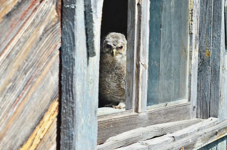 Birdwatching in Chernobyl