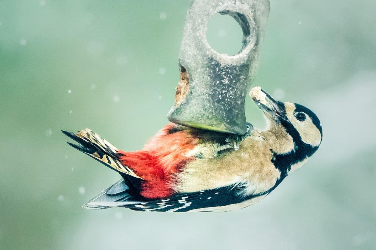 fotografía de aves por David Travis