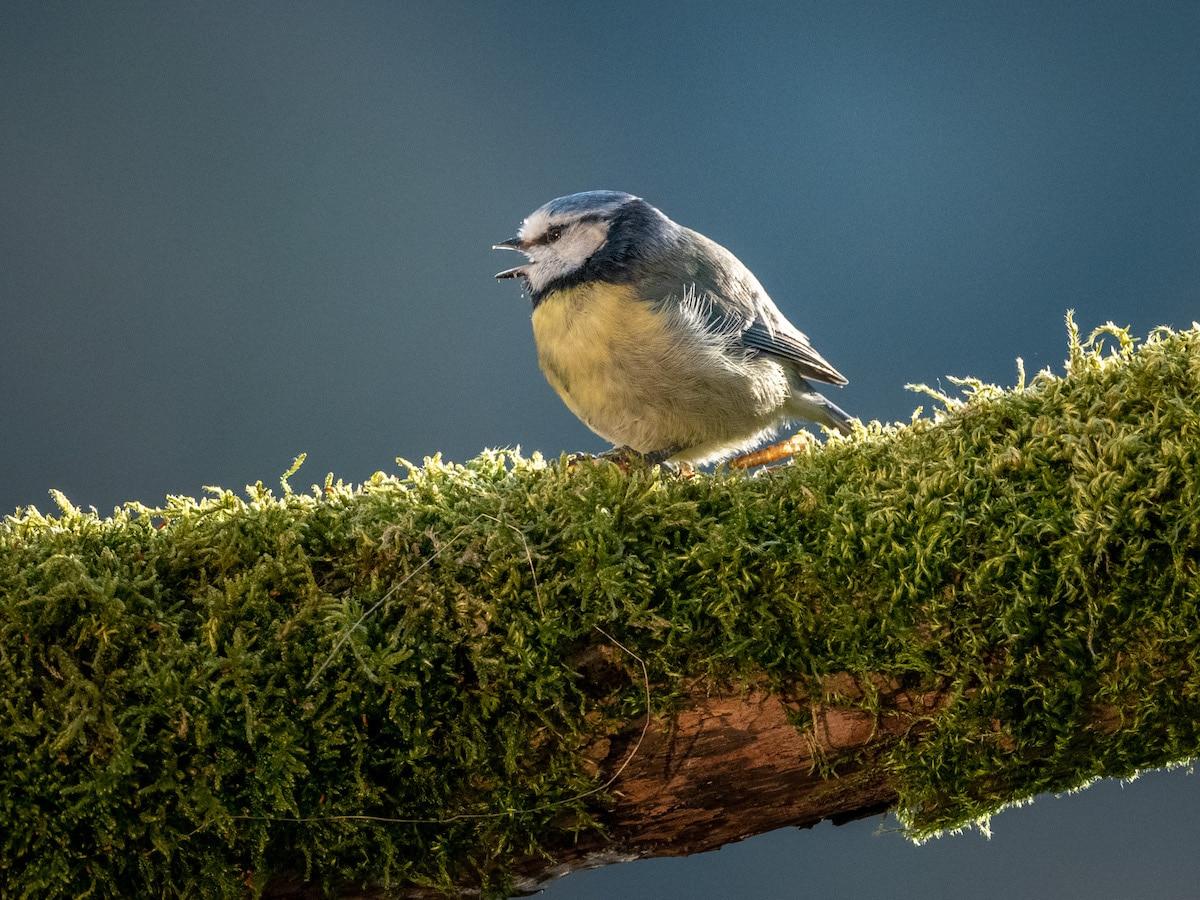 fotografías de aves por David Travis