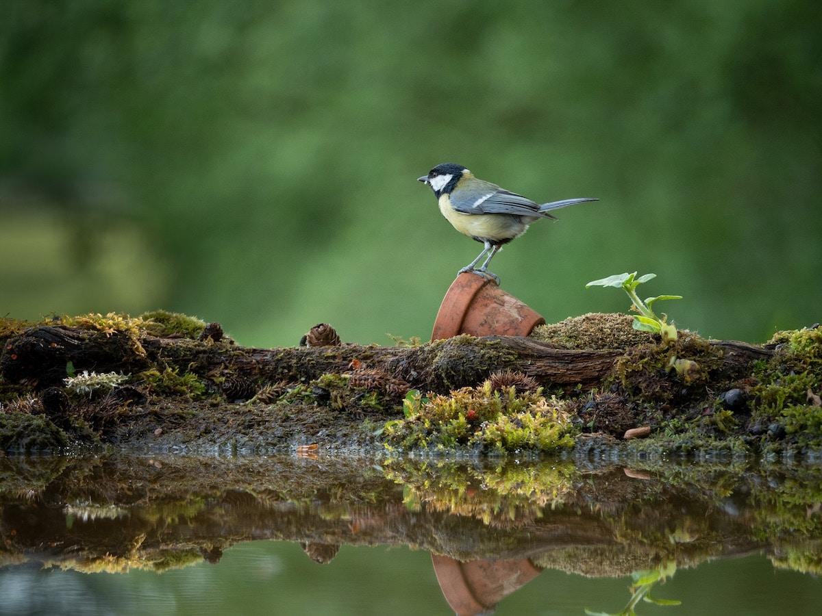 Bird Photography Tips by David Travis