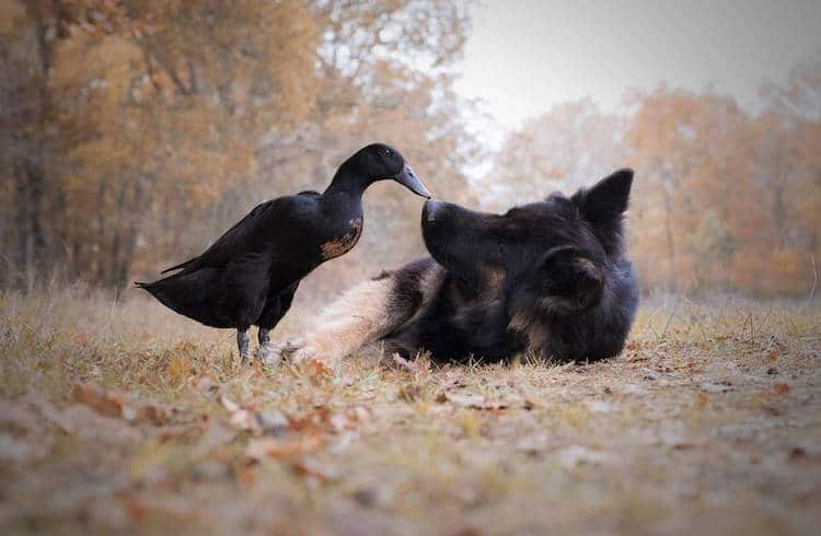 Dog and Duck Best Friends Vendetta and Lemony