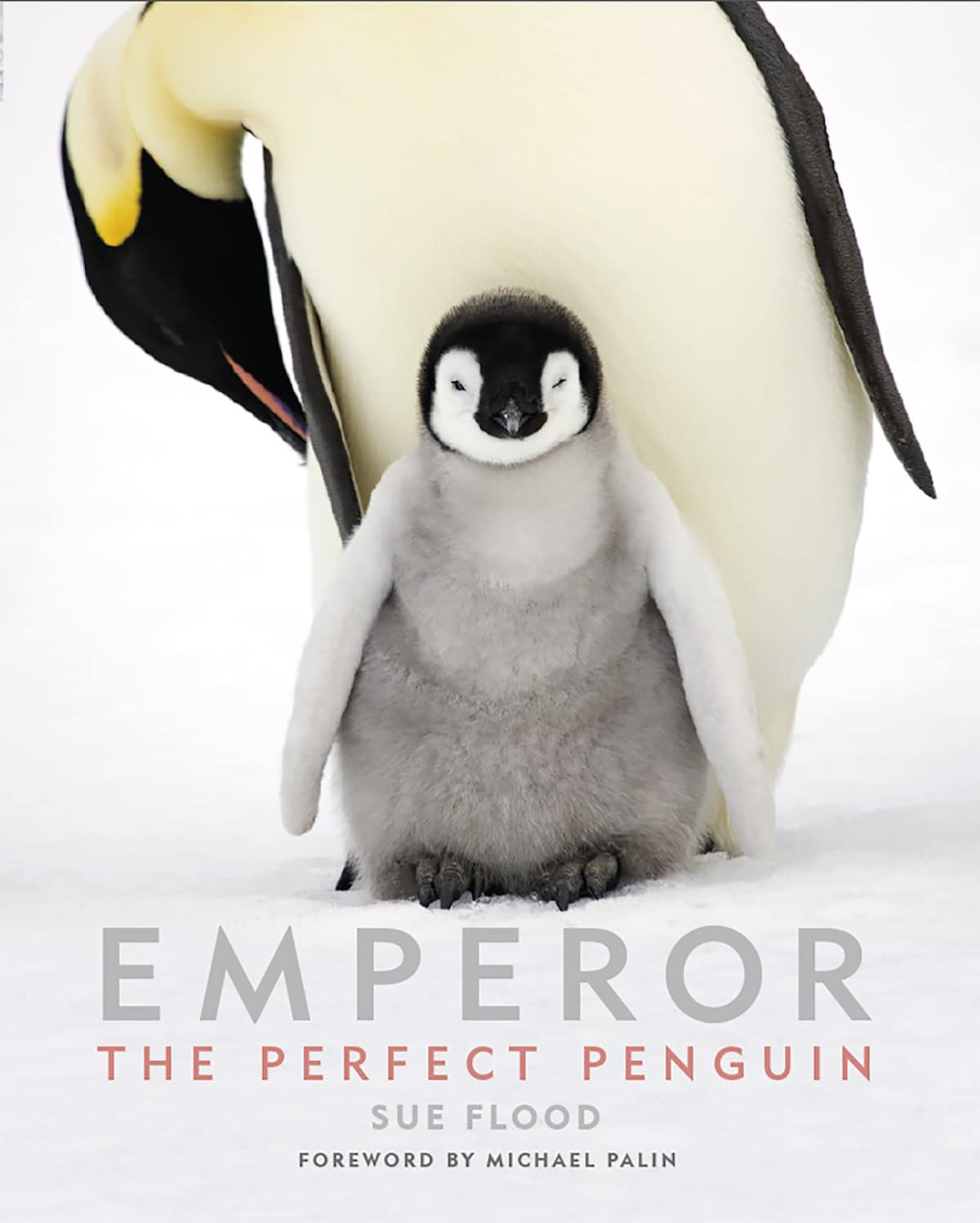 pingüinos emperador por Sue Flood