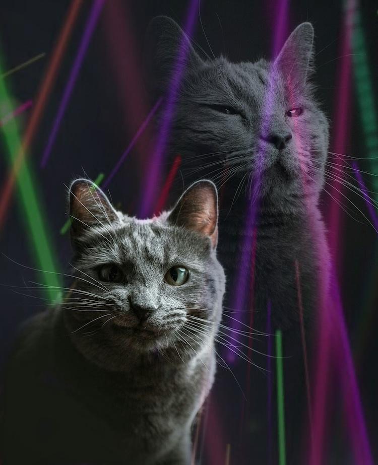 Divertida sesión de fotos con un gato