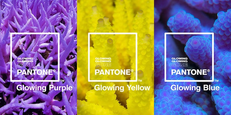 Glowing Glowing Gone - Pantone, Adobe, and Ocean Agency Awareness Campaign
