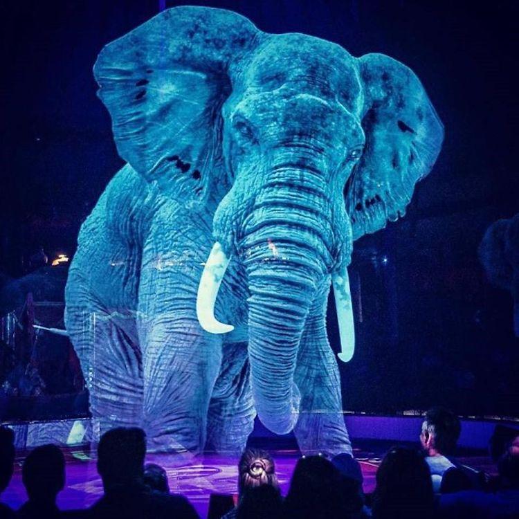 circo hologramas animales