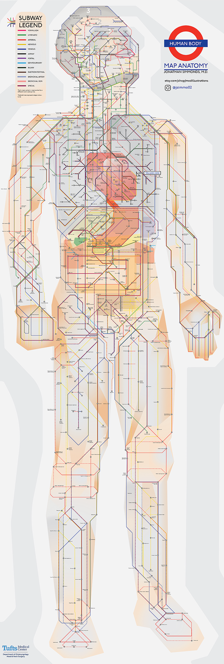 Human Anatomy Subway Map
