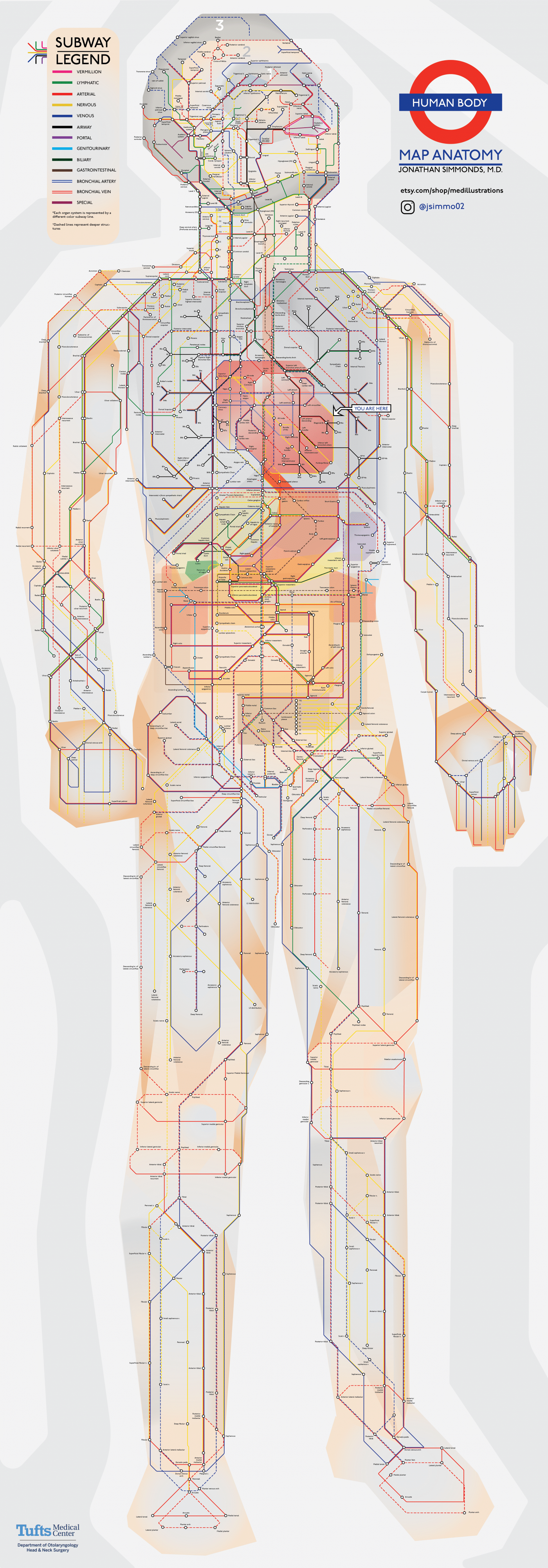 As A Subway Map.The Human Body Transformed Into Clever Subway Map