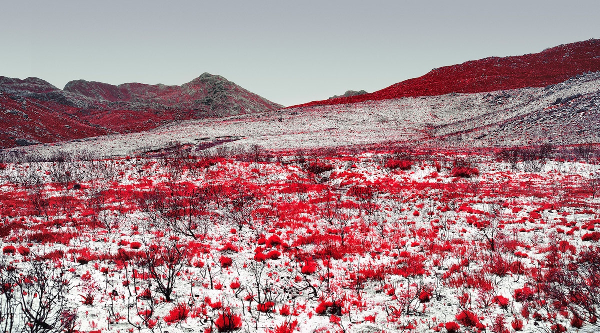 Infrared Photography by Zak van Biljon