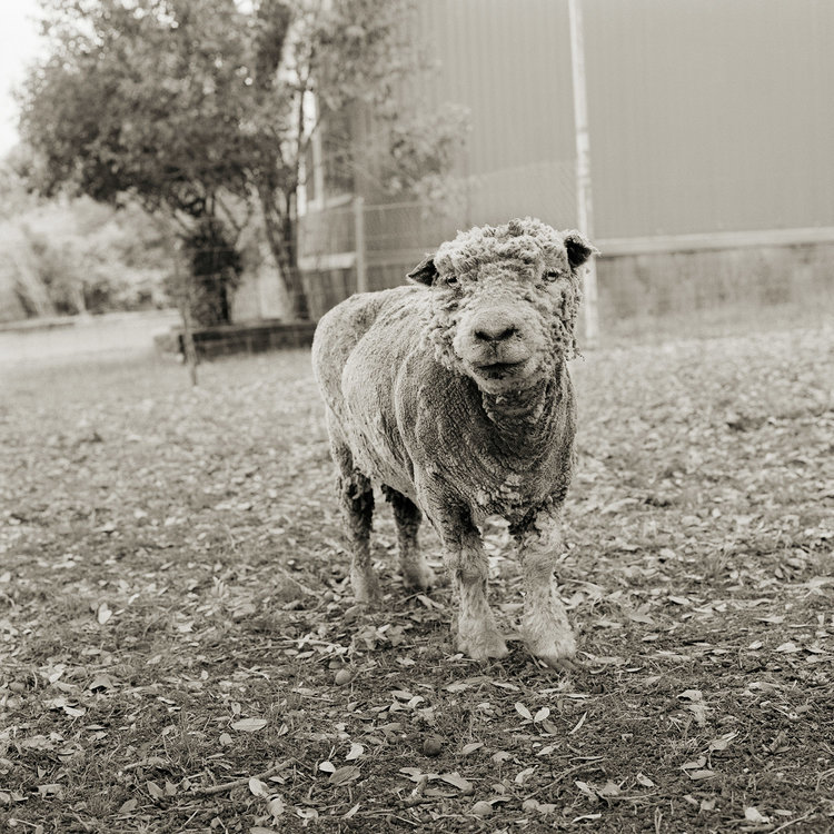 Animal Photography by Isa Leshko