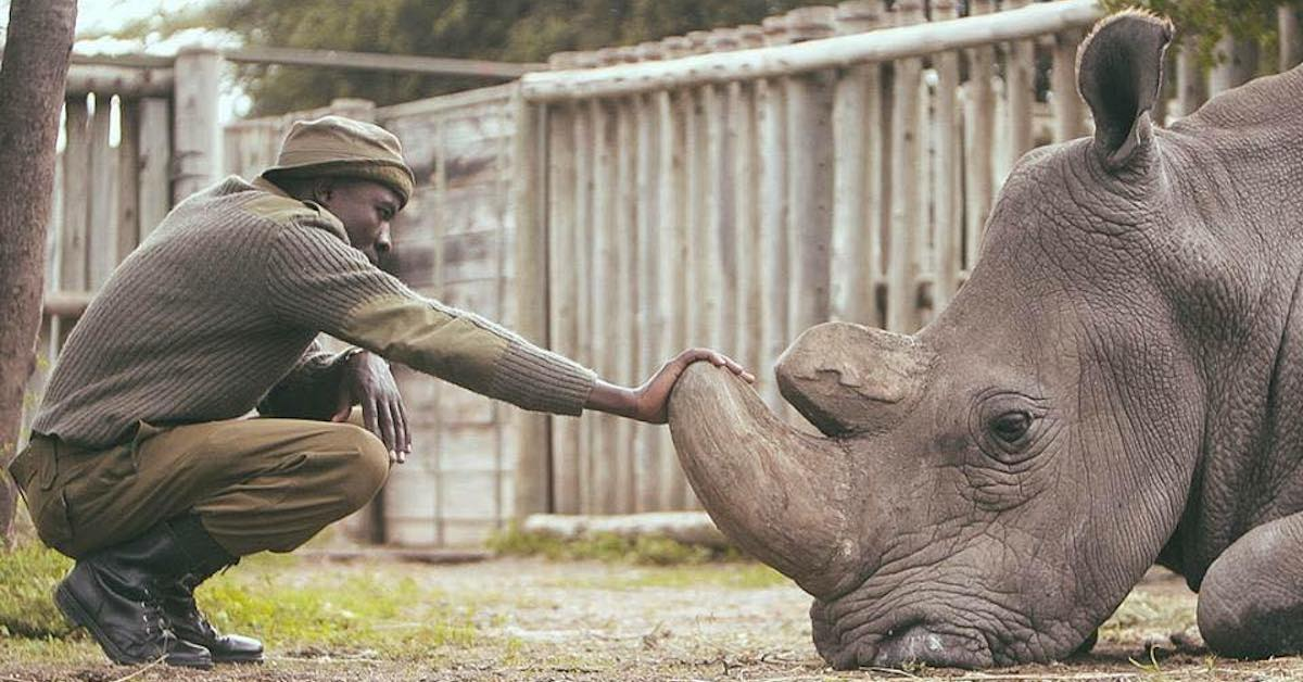 Interview: This Man Is Caring for the Last Two Northern White Rhinos on Earth