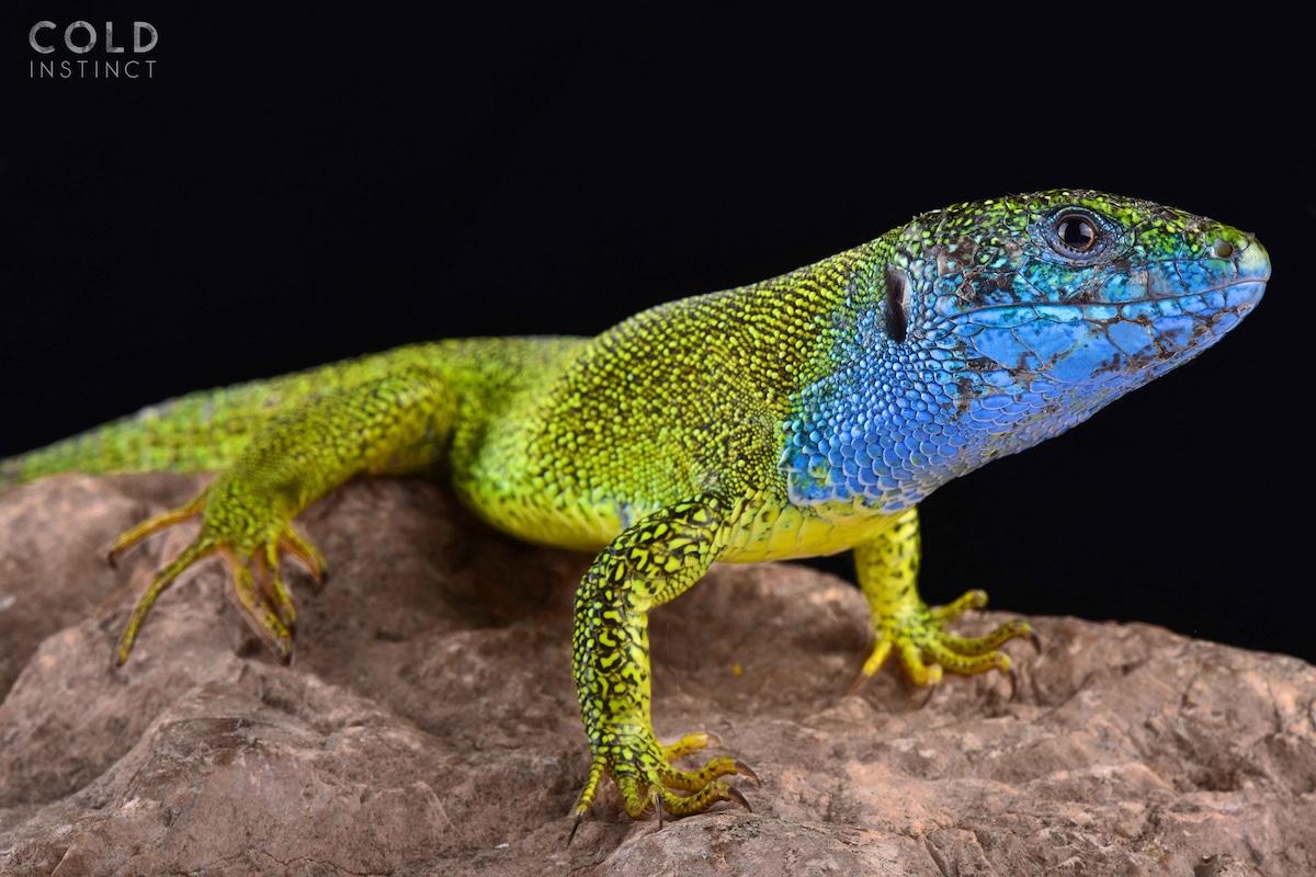 anfibios y reptiles animales de sangre fría