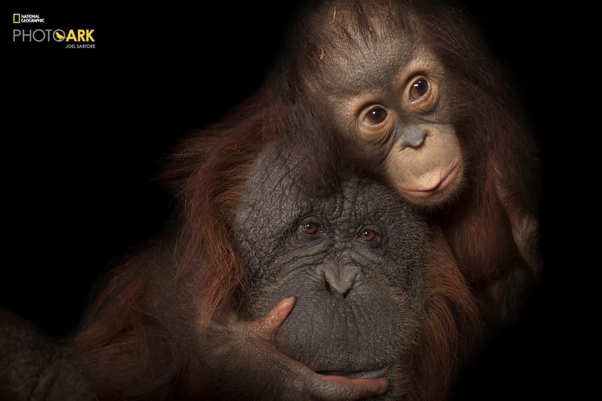 National Geographic Photo Ark by Joel Sartore