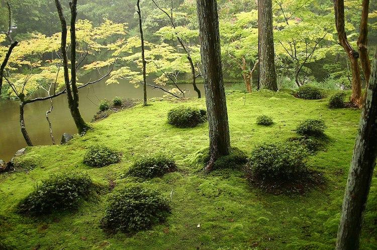 templo de musgo kioto