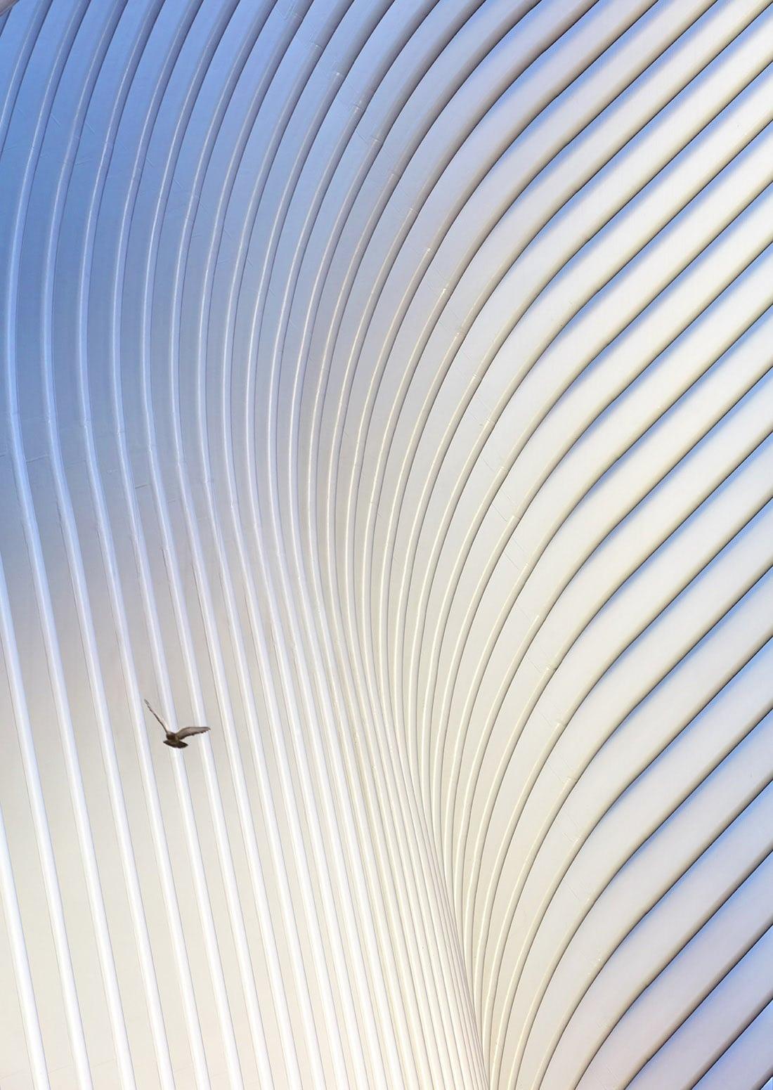 Santiago Calatrava Oculus