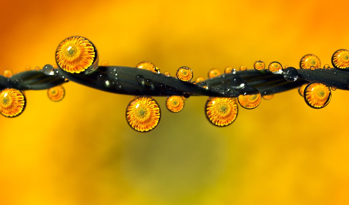 Water Droplet Macro Photography by Don Komarechka
