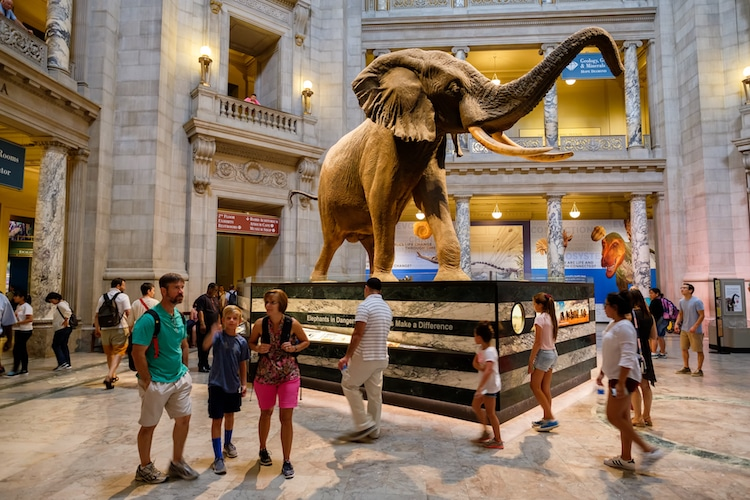 The History of the Smithsonian