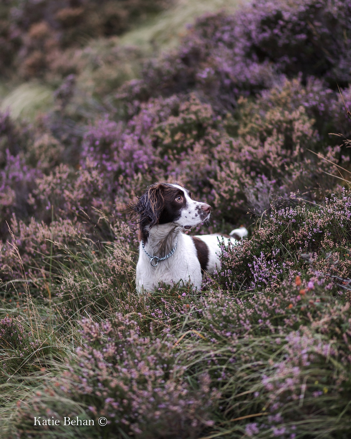 2019 Dog Photographer of the Year Dog Photos by The Kennel Club