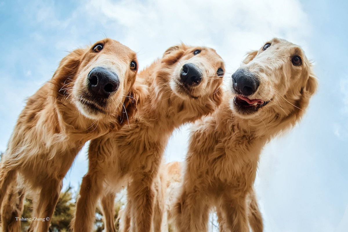 Fotos de perros para Dog Photographer of the Year 2019 de The Kennel Club