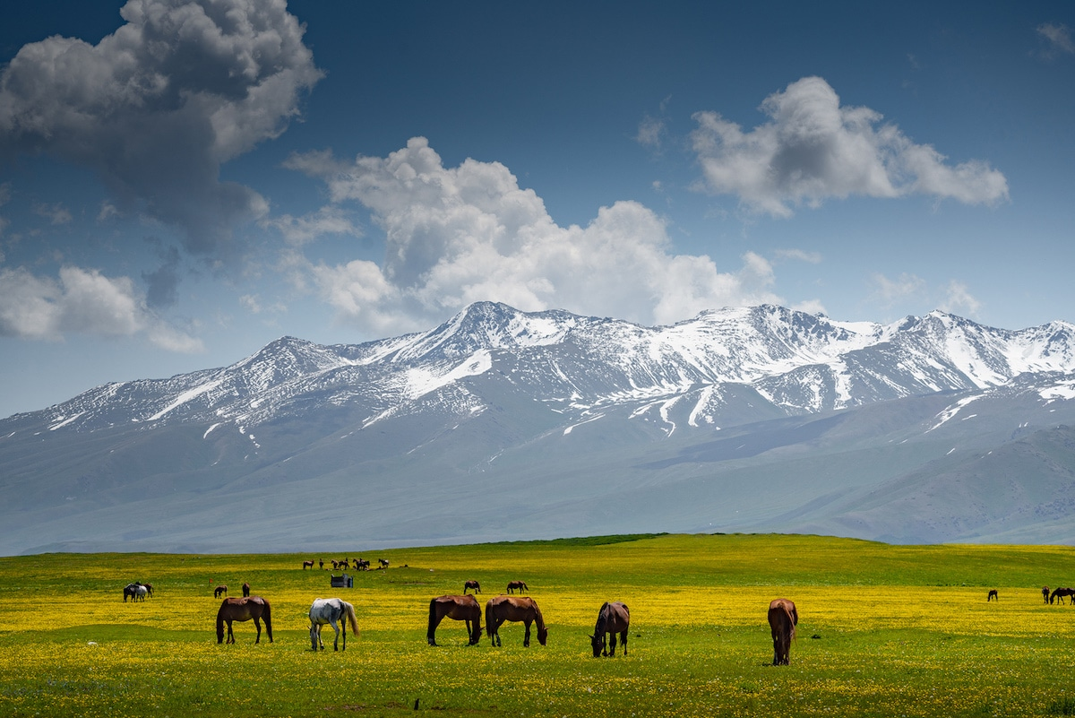 Horses Grazing in Front of a Mountain in Kyrgyzstan by Albert Dros